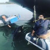 Chez @5_oceans_ on forme aussi les dauphins! Pas d'inquiétude à avoir, il est connu et se balade de port en port, il se prénomme «Randy»  #randy#dauphin#golfedumorbihan#formation#bateau#boat#life#job  #dauphin